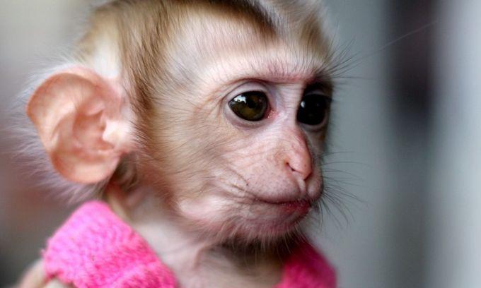 Сказка. Новости для обезьянки или Гозя2