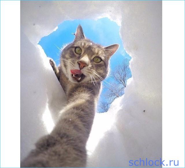 Проектный кот Барсук напал на Вову?!