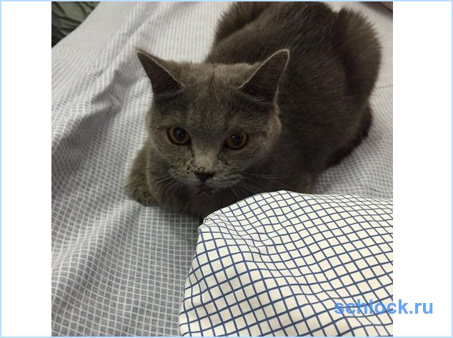 Новости о кошке