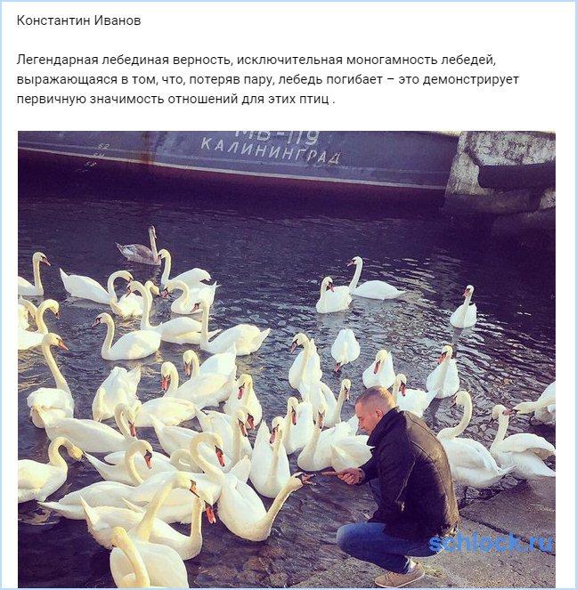 Иванов о лебединой верности