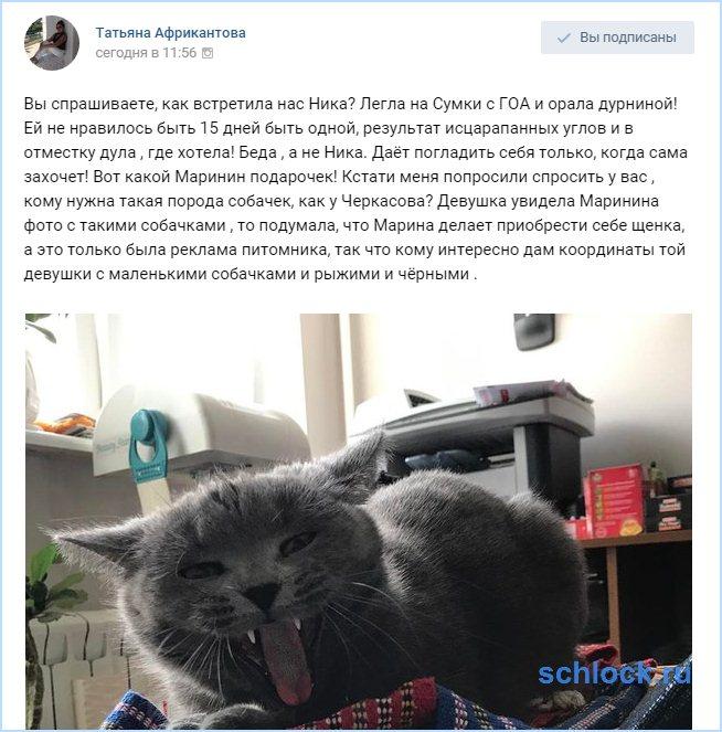 Кошка Африкантовой орала дурниной!